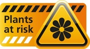 Plants at risk