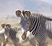 Conserving the grasslands of northern Kenya for people and wildlife (Photo: Grevy's Zebra Trust)