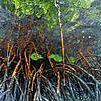 Mangrove roots. Photo: Andre Seale