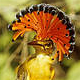 Pacific Royal Flycatcher (Onychorhynchus occidentalis) Photo: Rob Pople