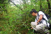 Surveying for Yuanbaoshan Firs in the Natural Nature Reserve Photo: FFI China