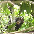Young male chimpanzee Photo: Chimbo