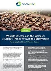 BiodivERsA Policy Brief #1 - RACE Photo: IUCN