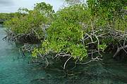 Mangrove ecosystems are valuable assets. Photo: IUCN-Imene Meliana