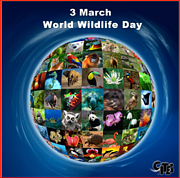 CITES World Wildlife Day Photo: CITES World Wildlife Day