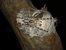 Rameshwaram Parachute Spider