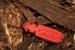 Cucujus cinnaberinus