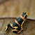 Summers' Poison Frog_Ranitomeya summersi