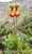 Ladys Slipper_Calceolaria fothergillii