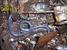 Taita African Caecilian_Boulengerula taitana