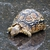Leopard Tortoise_Stigmochelys pardalis