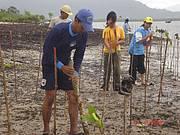 Mangrove replanting in Thailand. Photo: S. Somsak