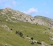 Velebit - the habitat of the Karst Viper. Photo: Ivona Burić