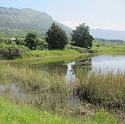 Pond in Konavosko field, Croatia. Photo: Dusan Jelic