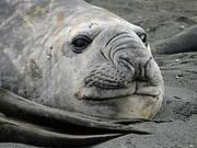 Resting seal. Photo: © Gaby Schwammer