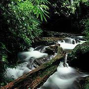 Saola habitat, Au Rong, Greater Annamites, central Vietnam. Photo: Jeremy Holden/WWF