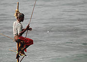 Traditional fishing off the coast of Sri Lanka: a key source of food and livelihood for local people. Photo: Corentin Basset