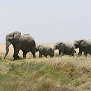 Elephants in Serengeti National Park, Tanzania Photo: Alicia Wirz