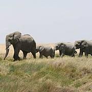 Elephants in Serengeti National Park, Tanzania Photo: Alicia Wirz