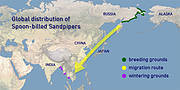 Spoon-billed Sandpiper migration map. Photo: WWT