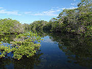 Mangrove finch habitat. Photo: CDF