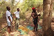 Training of former parrot hunter in the Bijagós islands. Photo: Rowan Martin