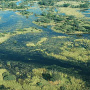 Okavango delta. Photo: Eliot Taylor