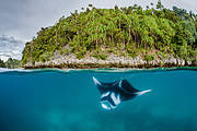 Worth more alive than dead Photo: Shawn Heinrichs for WildAid