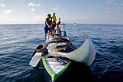 Most value of this big catch will go to middlemen and retailers Photo: Shawn Heinrichs for WildAid