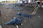 Cut up mantas at market Photo: Shawn Heinrichs for WildAid