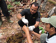 Sumatran Rhino Genetic Survey Bukit Barisan Selatan, National Park. Photo: YABI