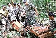 Rosewood seized during an enforcement patrol in Thap Lan National Park. Photo: FREELAND / DNP