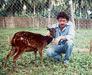 William with a Visayan Spotted Deer (Rusa alfredi) Photo: Gerardo Ledesma