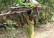 Woman carrying wood and leaves. Photo: Flickr/Bishii