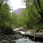 Lagodekhi Nature Reserve, Georgia. Photo: IUCN/Tobias Garstecki