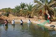 Harvesting Nile Tilapia in Algeria by V.Crespi Photo: V. Crespi