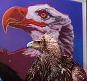 Darshan the Imperial Eagle poses in front of Andy Warhol's Bald Eagle. Photo: Freuds