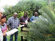 Identifying cycads species is crucial in order to apply correct charges Photo: EWT