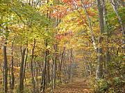 Trail at Kitayamazaki, Sanriku Fukko National Park, Japan Photo: Ministry of Environment, Japan