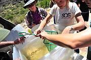 Christy Bragg helping translocate juvenile sandfish Photo: Gustav Klotz n John Lucas