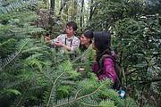 Visiting the community Yuanbaoshan fir nursery near Yuanbaoshan NR. Photo: Hu Xinhua from GIB