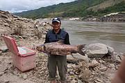Probarbus Jullieni Mekong river Photo: IUCN Lao PDR