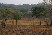 Chimbo Typical Boé landscape in the dry season with savanna and gallery forest in background. Photo: Chimbo