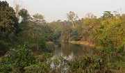 Habitat for tiger and their prey in Htamanthi Wildlife Sanctuary / WCS
