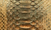 Python skin. Photo: Shutterstock
