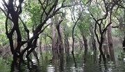 Flooded forest in Stung Sen core area, Cambodia. Photo: © Wild Cambodia Organisation