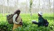 Photo: WCS India staff engaging with tea plantation staff © Divya Vasudev - WCS India