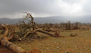 Socotra Archipelago, Yemen was hit cyclones in 2015 - a rare weather event in this part of the Indian Ocean. Photo: IUCN / Ismail Mohammed.