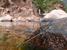 Azuragrion granti (Socotra Bluet)