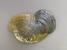 Epioblasma capsaeformis (Oyster Mussel)